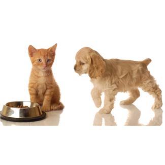 Both dog lovers and cat lovers alike can use suggestions of names for their pets.